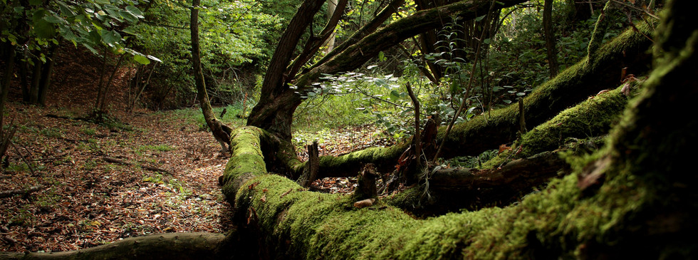 Zespół Parków Krajobrazowych nad Dolną Wisłą