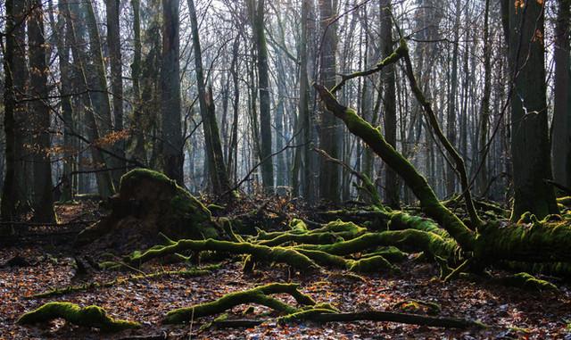 Rezerwat Brzęki