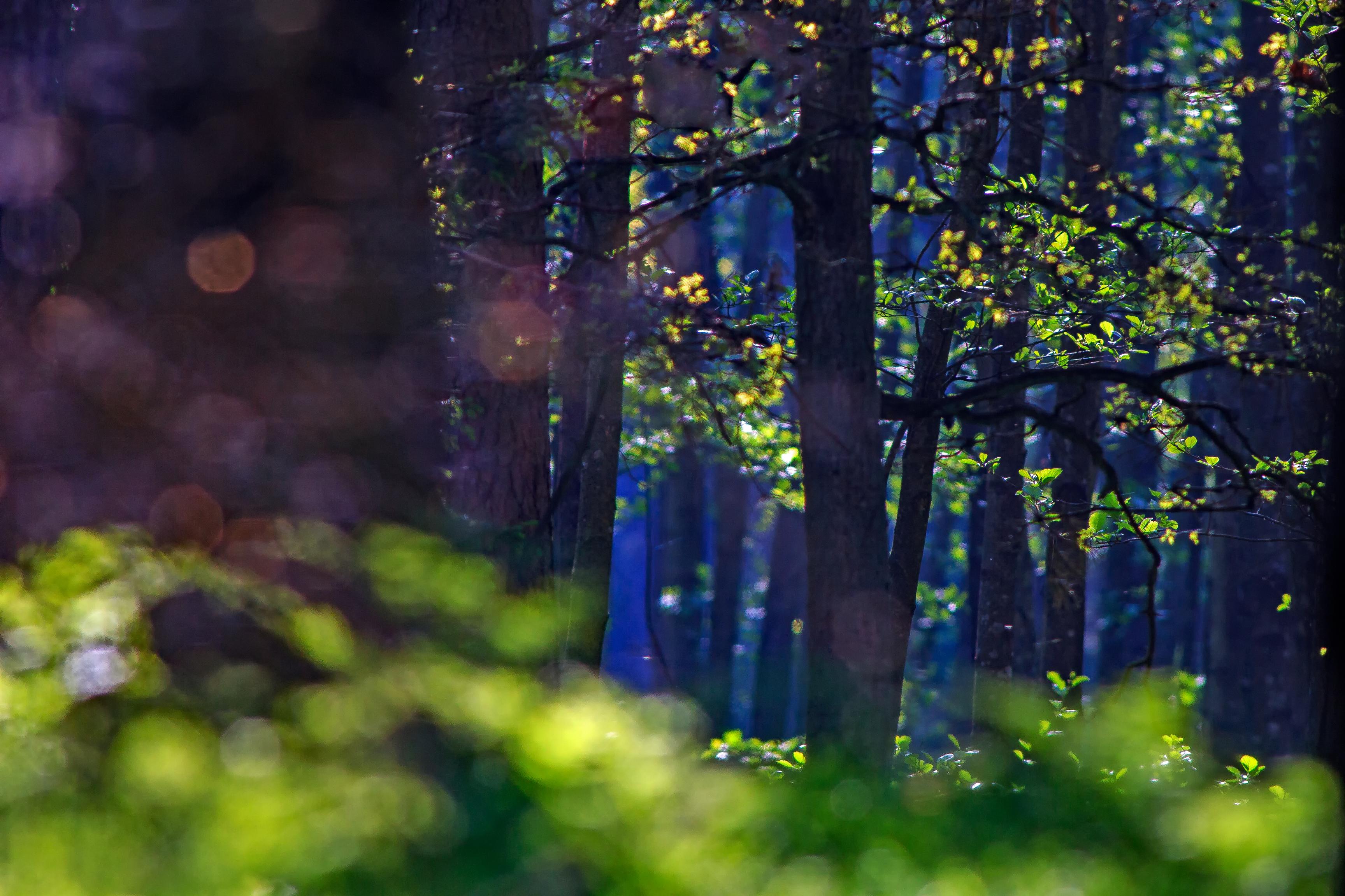 Opowieści ze Stumilowego Lasu