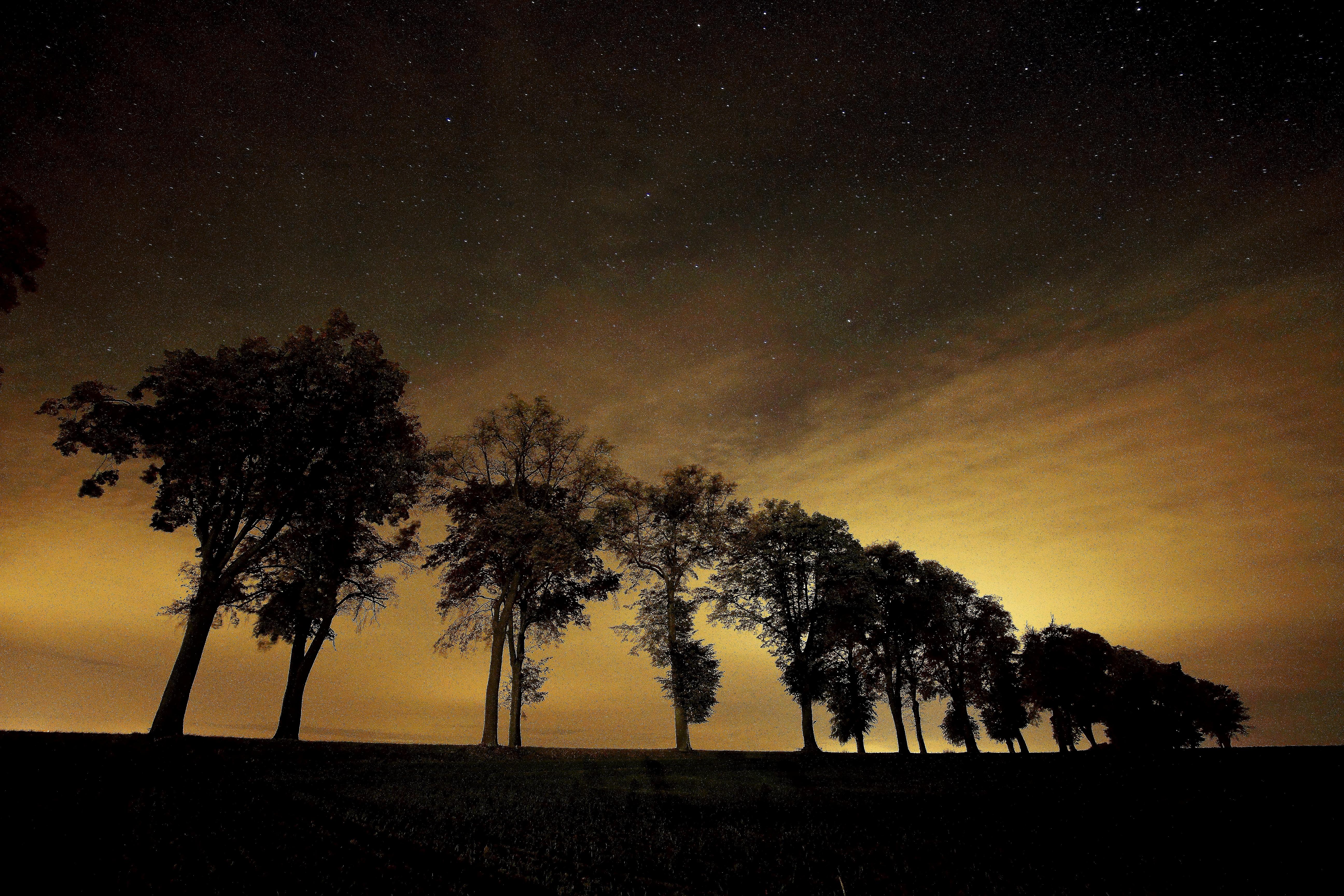 Aleja lipowa nocą