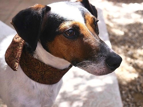 Le Foulard Pour Chiens. Le Tinou-foulard Vesuvio