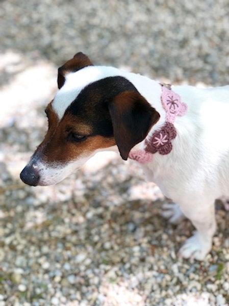 Collier pour chien en crochet MARRON ROSE FLEUR