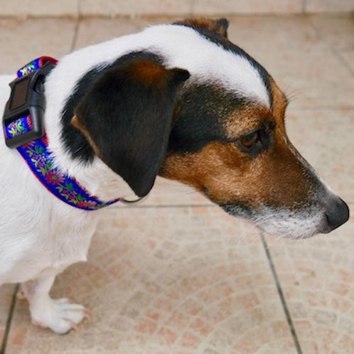 Collier pour chien made in France Tinou Click DOUCEUR