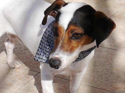 Le Bandana pour chien à nouer Tinou-Gavroche Little Grey