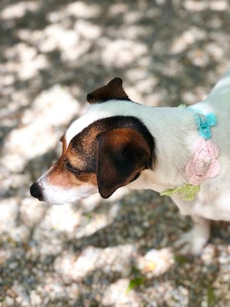 Collier pour chien en crochet ROSE BEIGE GALET