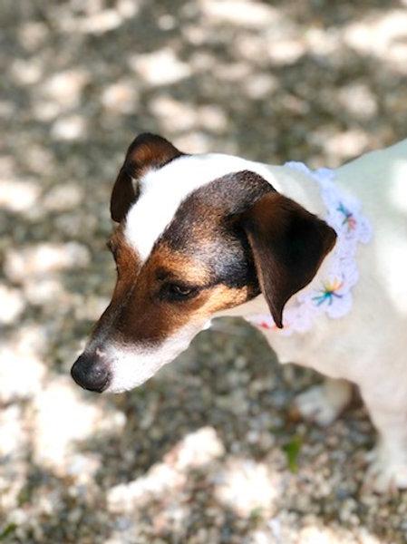 Collier pour chien en crochet BLANC HORIZON GALET
