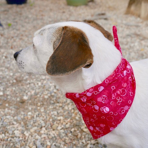 Le Bandana pour chien à nouer Tinou-Gavroche TUTTI FRUTTI