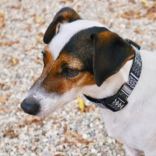 Collier pour chien made in France Tinou Click INDIANA