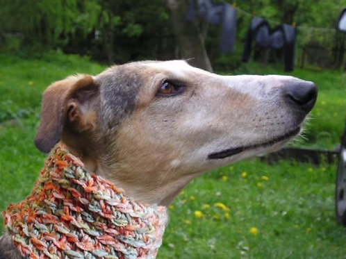 Tinou-Snood pour lévriers Tendresse Orange