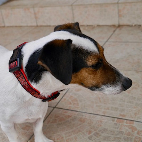 Collier pour chien made in France Tinou Click SANGUINE