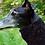 Thumbnail: Tinou-Snood pour lévriers Tendresse Hippo