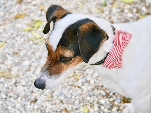 Noeud papillon pour chien DANDY BORDERLINE