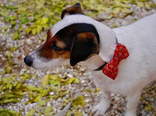 Noeud papillon pour chien DANDY RED