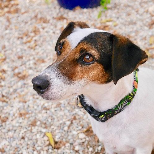 Collier pour chien made in France Tinou Click TUTTIFRUTTI