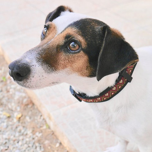 Collier pour chien made in France Tinou Click FANSASIA