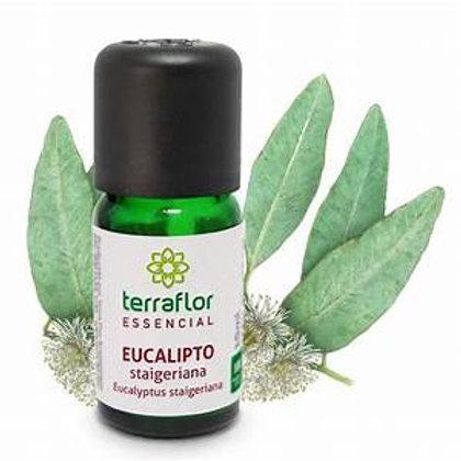 Óleo Essencial  de Eucalipto Staigeriana 10 ml – Terra Flor