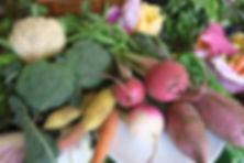 鎌倉のさなみ畑の野菜