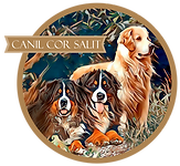 Logo do Canil Cor Salit de Bernese e Golden Retrieve e venda de Fihotes
