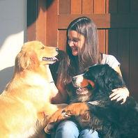 bernese, golden retriever, bernse mountan dog, golden, filhote, canil, santa catarina, paraná, são paulo, curitiba, florianópolis, porto alegre