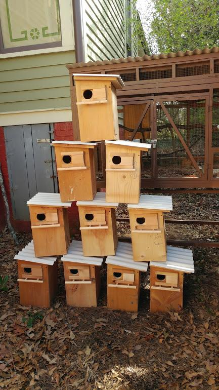 Squirrel Boxes Complete