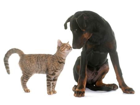 Canine Socialization & Habituation