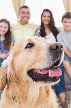 family dog training kids adults