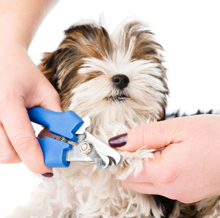 Husbandry and Taking Care of your Pup