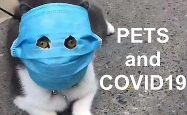 Covid19-coronavirus-pets-dogs-825x510.jp