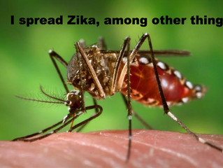 Zika Virus (and On Point Radio)