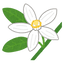 flower_mikan.png