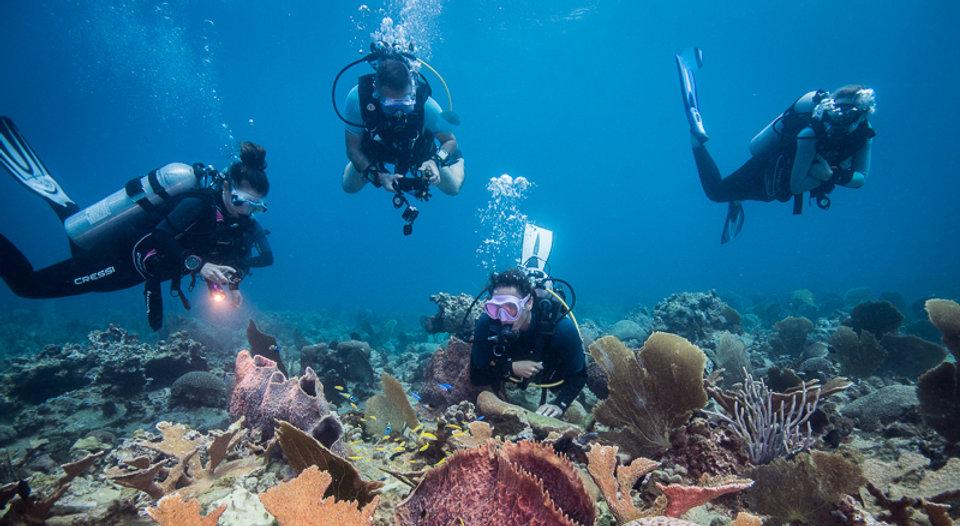 Kariba-plongee-accueil.jpg