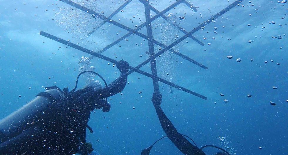 Arbre pour bouturage des coraux