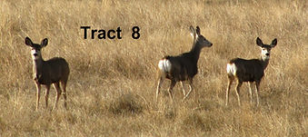 h19-13 deer - copy.jpg