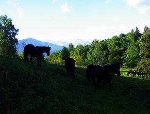 Cheval de Merens, Ariège