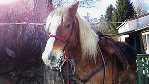 2021-02 - Ariège - Pôle Equestre -  (10)