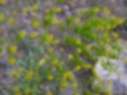 Pastel, Atlas, Maroc