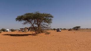 Oued Darmelil Adrar campement nomade