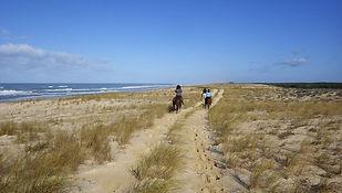 Randonnée Equestre, Mimizan, Landes, Forêts, Plages, Marina,