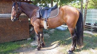Junts, Randonnée, équestre, cheval, Vallespir, Arles sur Tech, Amandine, Aineto, Pyrénées orientales, PO