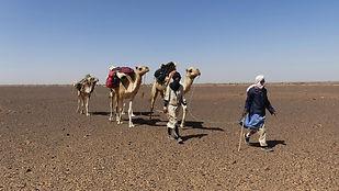 Caravane dromadaire adrar mauritanie chinguetti