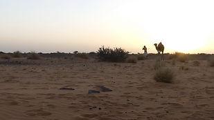 Domadaire camel desert sahara
