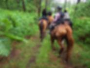 randonnée équestre, forêt landaise, centre équestre Marina