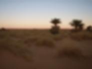 Oasis Mayatek, Adrar, Mauritanie
