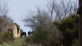 Junts, Vallespir, Pyrénées, orientales, cheval, chevaux, randonnées, Equestres, Arles, Tech, Amandine, Aineto, promenade, poney, Canigou, mines de Formentère
