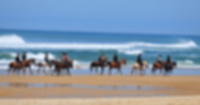 Randonnee, voyage, randonnee equestre