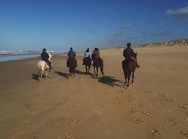 Landes, randonnée à cheval, centre equestre marina, mimizan, cheval