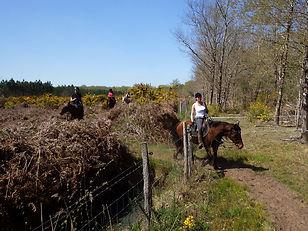 Canal des étangs, randonnée équestre, cheval
