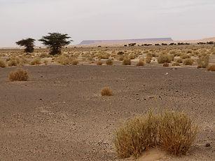 Aderg Adrar Mauritanie