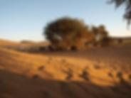 Guelb El Richat, Adrar, Mauritanie