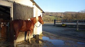 Pôle Equestre Leran, Philippe Labeda, formation ATE, Randonnées, cheval, équestre,